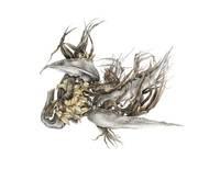 Paul Rovis, Strelitzia nicolai