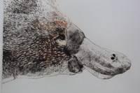 John Sharp, Platypus