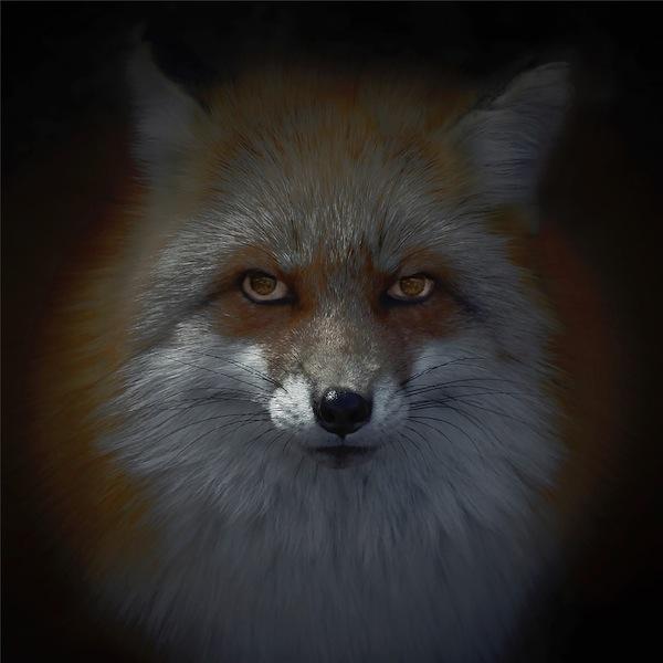 Luke Hardy, kitsune-bi [foxfires] X